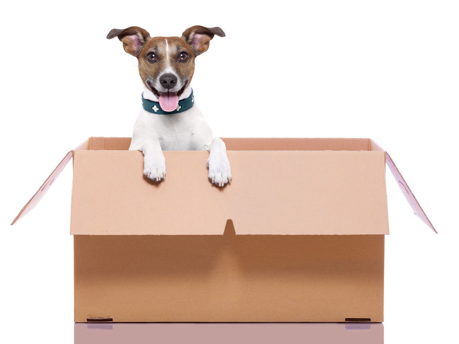 Removals Advice - Moving House